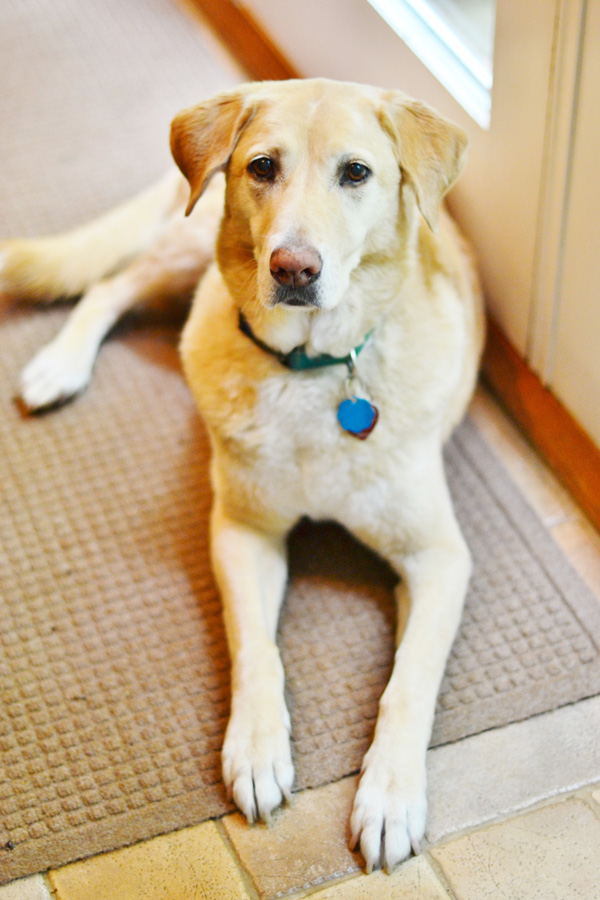 Daisy's Pet Service gives Companionship