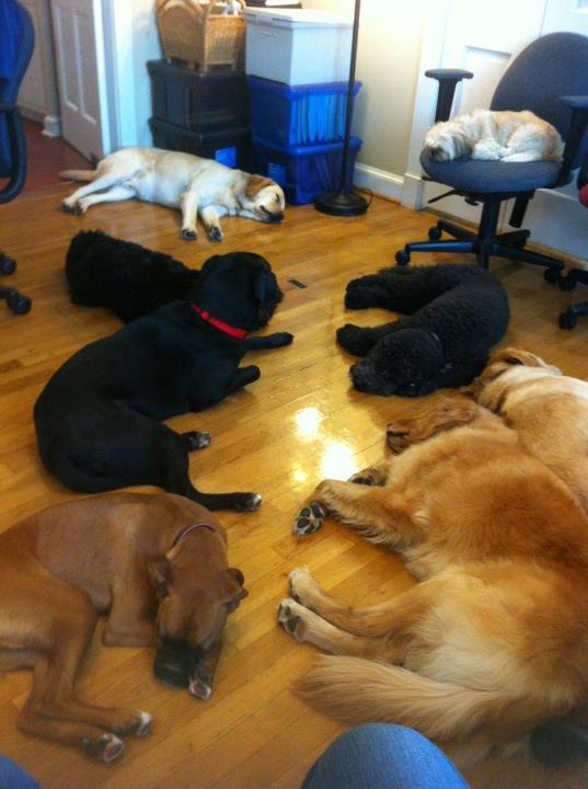 Daisy's Pet Service socializes your dog